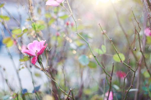 多做事少说话的说说:珍惜时间,善待时光,多做事,少说话