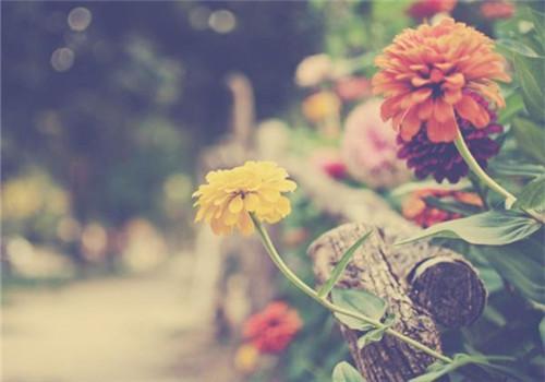 人生如茶的说说:人生如茶,沉时坦然,浮时淡然,拿得起也需要放得下